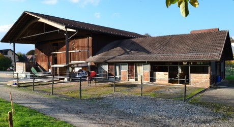 Pferdepension Storenberg Stall
